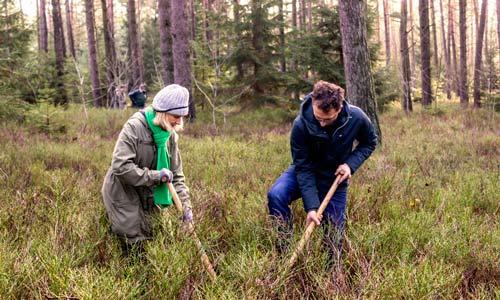 Spendenaktion Bäume pflanzen für Newsletter-Abonnenten