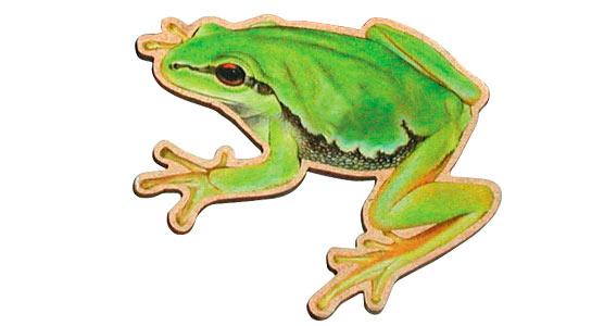 magnet Frosch